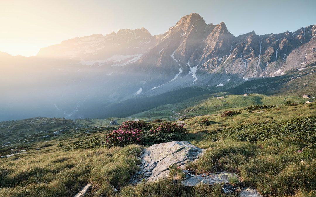 Post‐glacial determinants of regional species pools in alpine grasslands