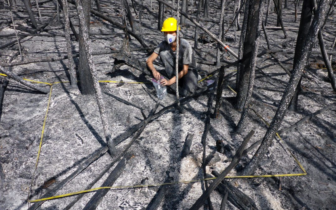 Environmentally persistent free radicals are ubiquitous in wildfire charcoals and remain stable for years