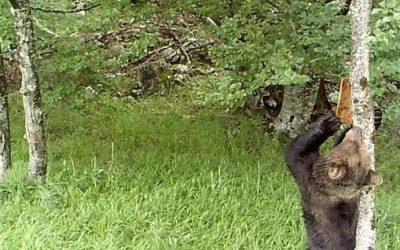 El uso de señales visuales en la comunicación entre mamíferos